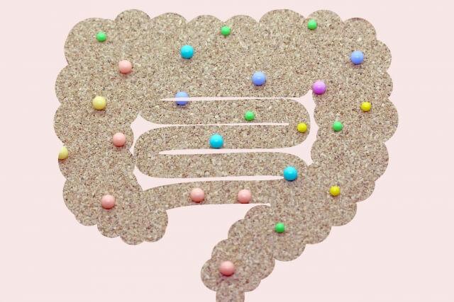 腸内細菌のイメージ写真