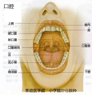 口腔の名称