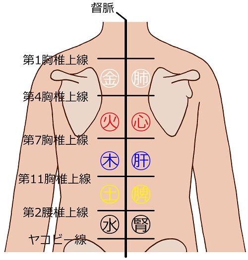 背中を5行に分類した図