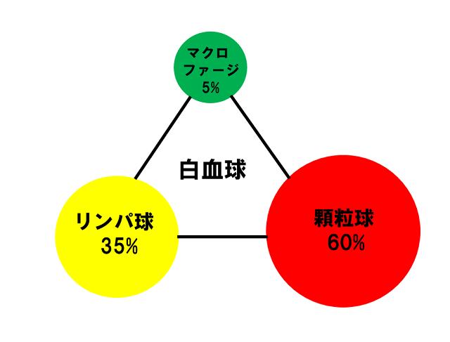 白血球の割合